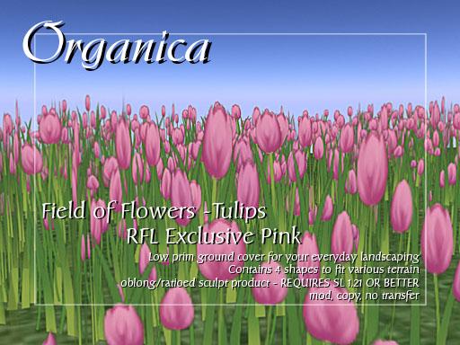 rfl-tulips-vendor