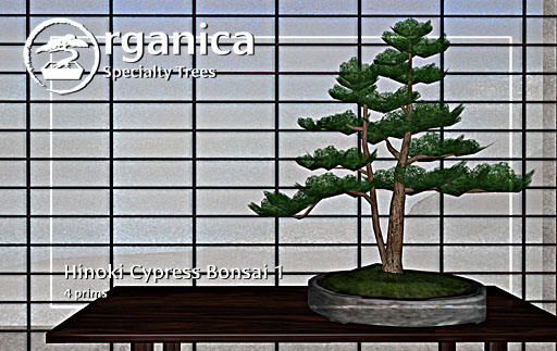 hinokibonsai1-vendor