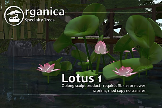 New trees and plants at Organica