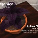 New Coleus plants + Rock walls now available