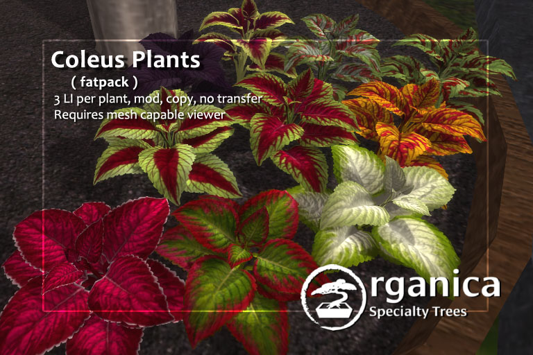 New Coleus plants + Rock walls now available