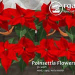 Poinsettia Day!
