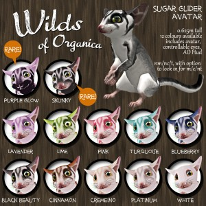 SugarGlider-Vendor-1024