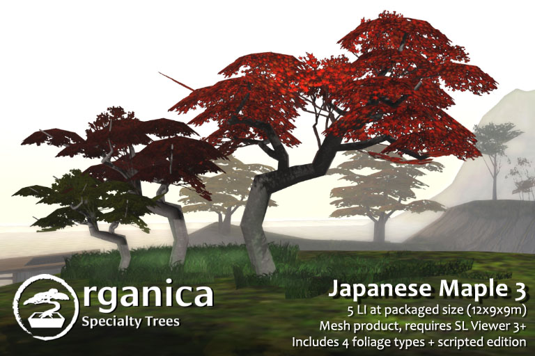 JapaneseMaple3-vendor
