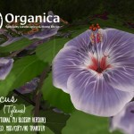 Eight new hibiscus plants available now!