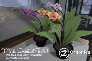 Orchid-Vendor-768