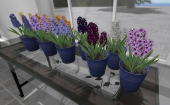 Grass Tops, Hyacinth and Morning Glory now available!