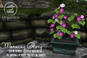 MorningGlory-Vendor-LaVieEnRose