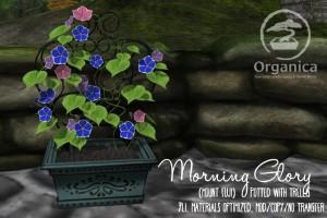 MorningGlory-Vendor-MountFuji-768