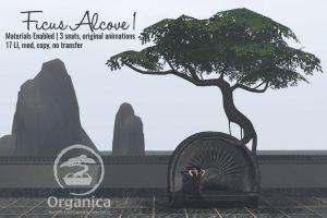 FicusAlcove1-vendor