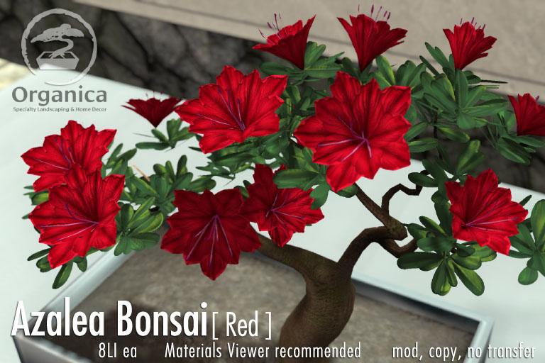New Azalea Bonsai at Organica