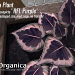 Organica region now reopened, plus new releases for Home & Garden Expo!